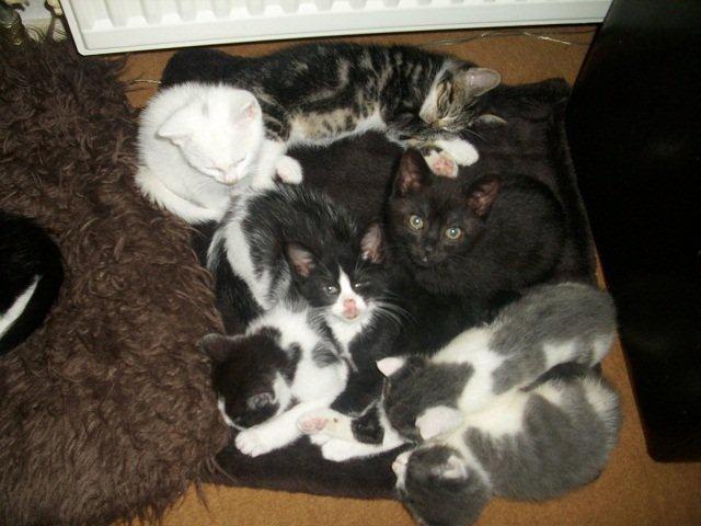 kittens pers pasgeboren