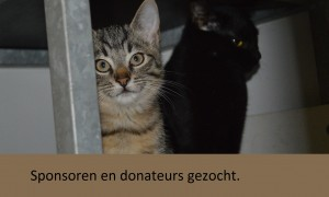 Sponsoren en donateurs gezocht