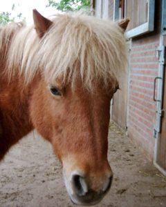 """Vera is 29 jaar geworden op 15 mei 2012 en woont ook in """"de Paardenkamp"""""""