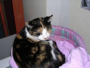 Mrs.Bean was 17 toen zij in 2006 naar de kattenhemel ging