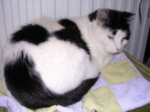 Chippy was 19 toen zij in 2008 naar de kattenhemel ging