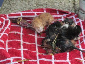 geboorte kittens Grave 1