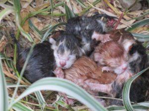 geboorte kittens Grave