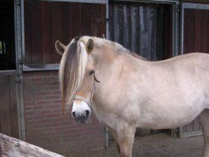"""Karin is 22 jaar geworden op 21 april 2012 en woont nu in """"de Paardenkamp"""""""