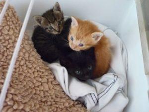 Kittens Leerdam