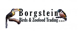 logo borgstein