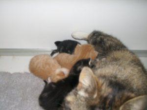 Moederpoes met 5 kittens