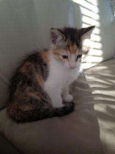 Miepje heeft een eigen mandje gevonden! Ze heeft de naam Kiki gekregen, we wensen haar en de nieuwe eigenaar veel geluk samen!