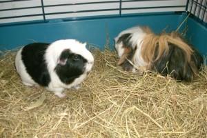 Klaartje en Swiffer (in 2012 overleden) zijn pas geadopteerd