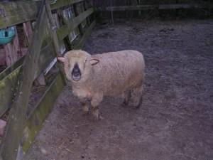Pippi was 13 jaar toen zij in 2007 naar de schapenhemel ging
