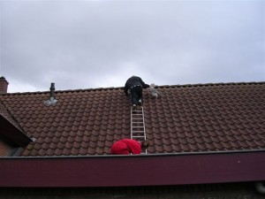 Help! Kat op het dak!