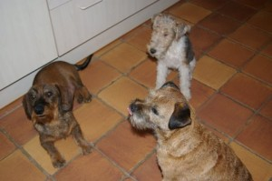 Elmo (net overleden na Lyda), Yari en Murphy wachten op een koekje