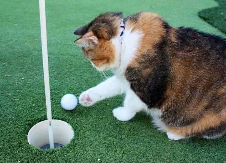 Charity Golf Event Superkatten